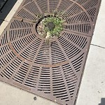 Tree Planting Request at 1701 W Lawrence Ave, Chicago Il 60640, United States