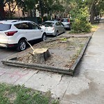 Tree Planting Request at 2023 W Thomas St, Chicago Il 60622, United States