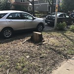 Tree Planting Request at 2106 W Wilson Ave, Chicago Il 60625, United States